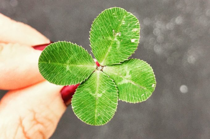 Cloverleaf - Affirmations for the New Year